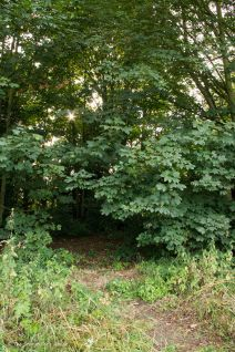 Entrance to Wooded Area and Stream 2