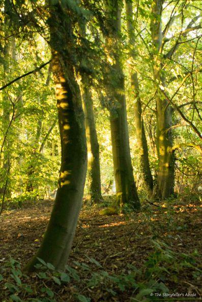 Golden Hour Trees 2