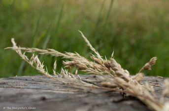 grass bundle on stump 2