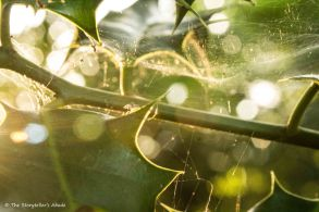 Holly Leaves, Spiderwebs and Sunlight