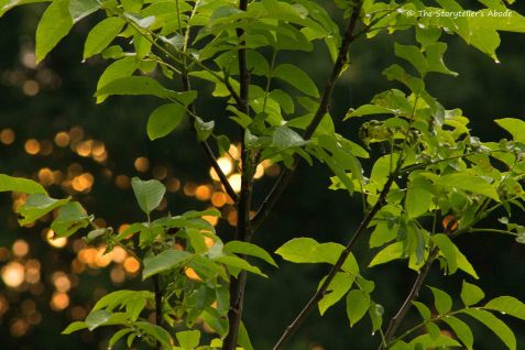 Leaves at Dawn