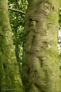 Names Carved into Holly Tree