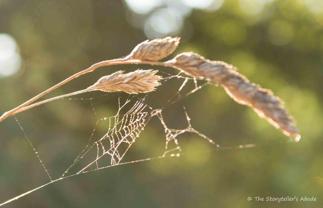 Spiderweb on grass