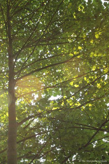 Sunlit leaves (2)
