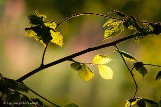 Sunlit Leaves 2