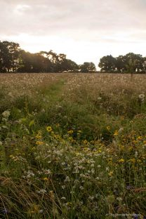 View Over Meadow at Dawn 2