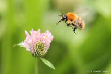 bee-approaching-thistle