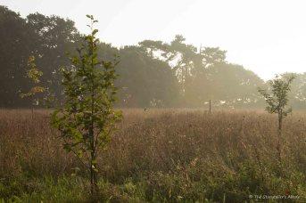 dawn-lit-little-trees-5