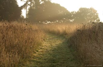 dawn-lit-path-through-meadow-2