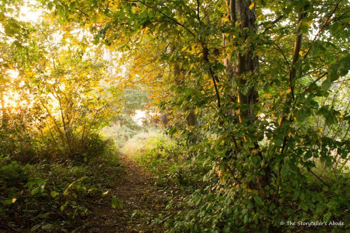 dawn-path