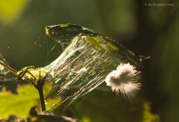 feather-caught-in-web