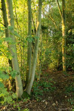 streamside-path-in-golden-light