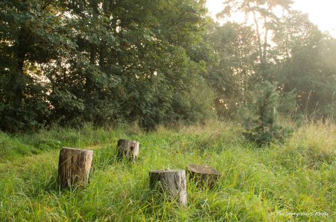 tree-stumps-at-dawn