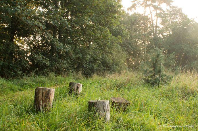 tree-stumps-at-dawn