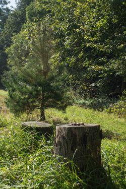 acorns-on-tree-stump