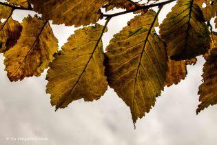 autumn-leaves-2