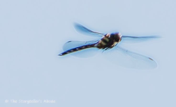 dragonfly-in-flight