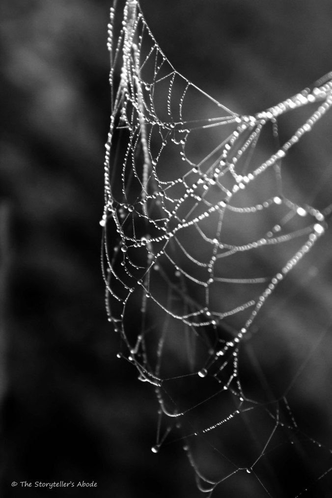 droplets-on-web