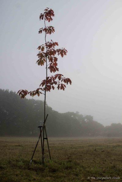 king-tree-in-mist