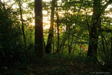 light-through-trees-on-streambank
