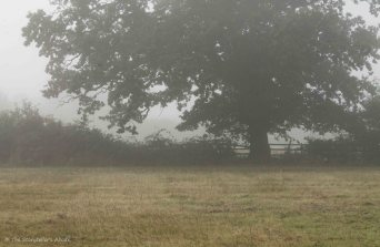 misty-view-to-fence