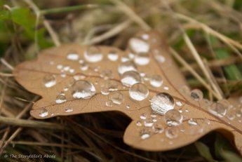 raindrops-on-leaf