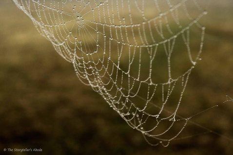 spiderweb-3