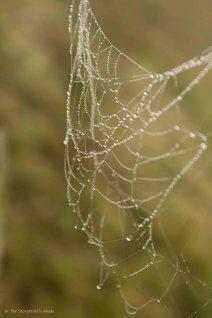 spiderweb-4