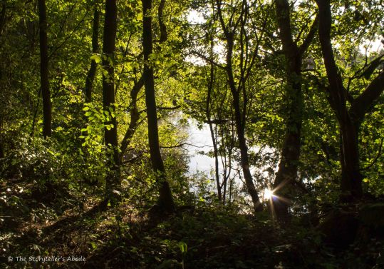 streambank-sunburst-reflection