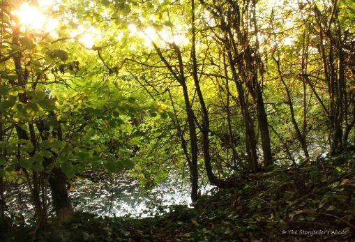 streambank