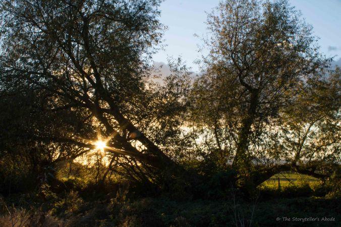 sunburst-through-trees
