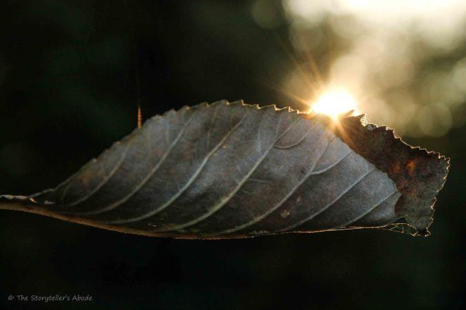 sunlit-leaf-2