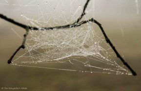 webs-on-branches