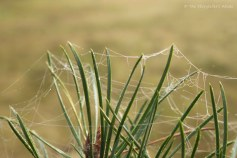 webs-on-pine-colour-2
