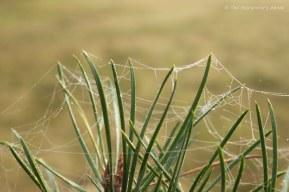 webs-on-pine-colour-2