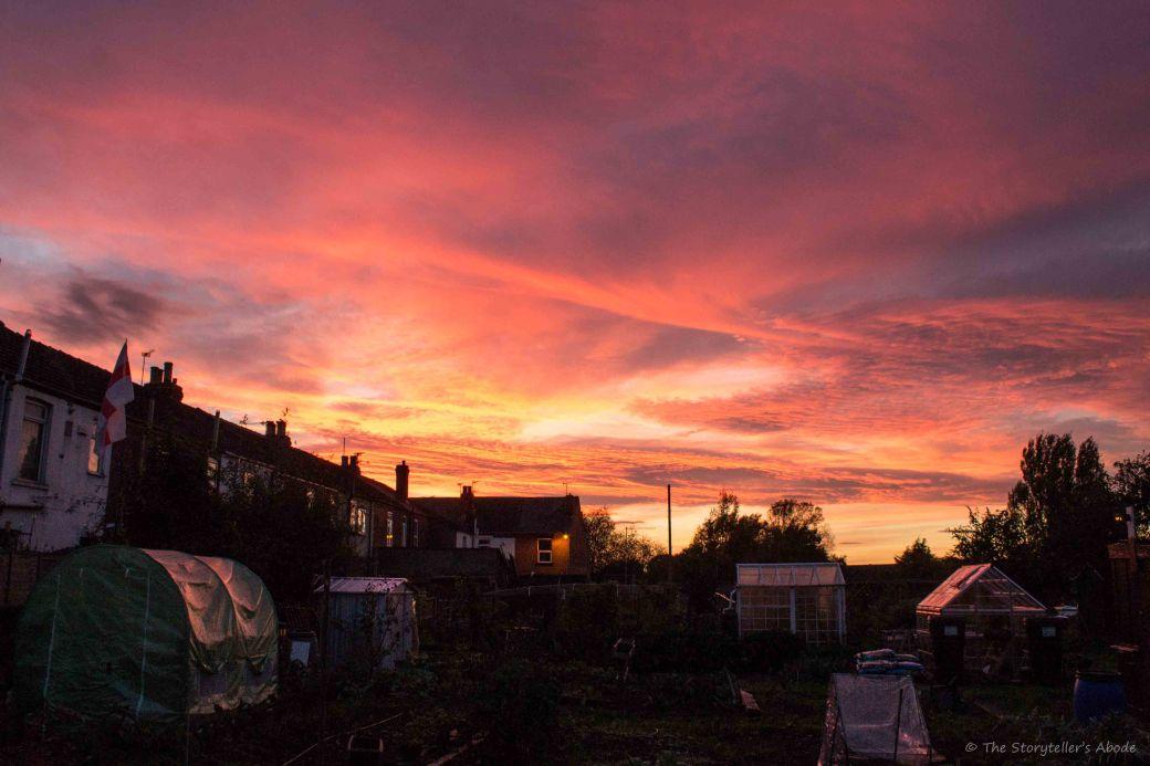 Allotment Sunset.jpg