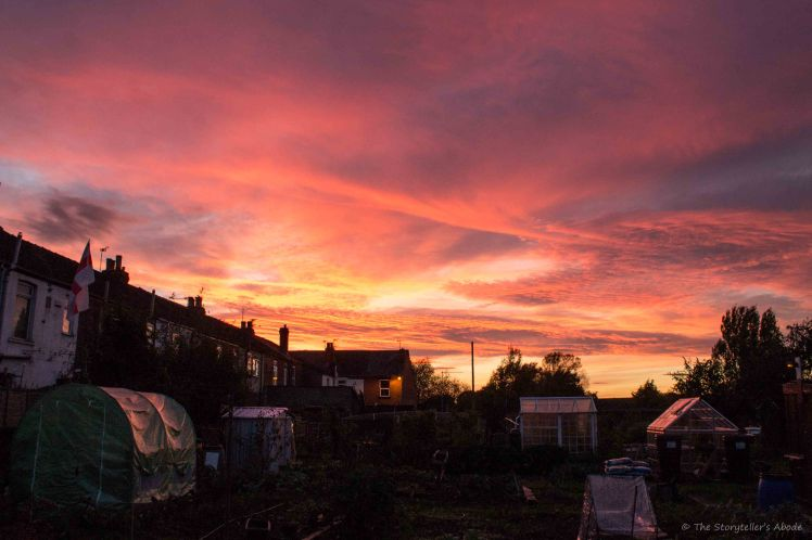 Allotment Sunset.jpg