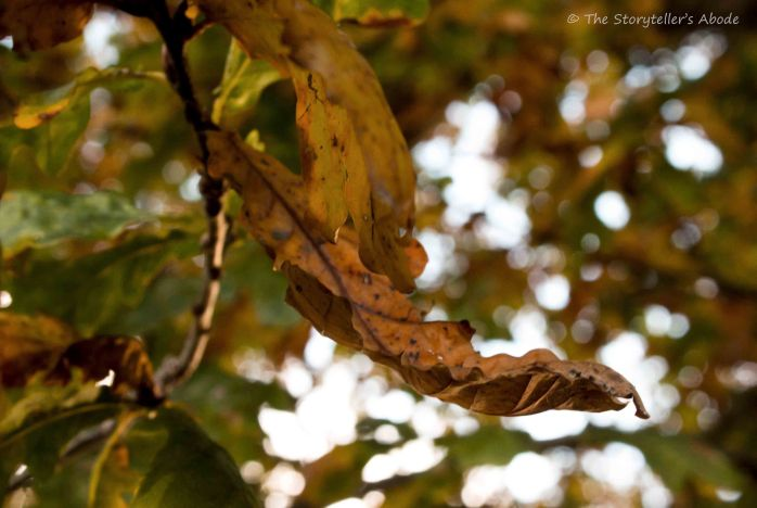 autumnal-leaf
