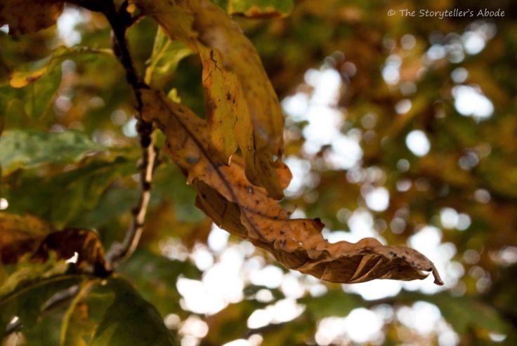 autumnal-leaf