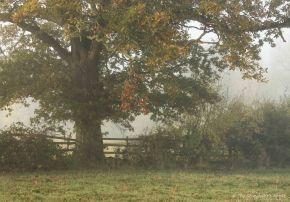 autumnal-tree