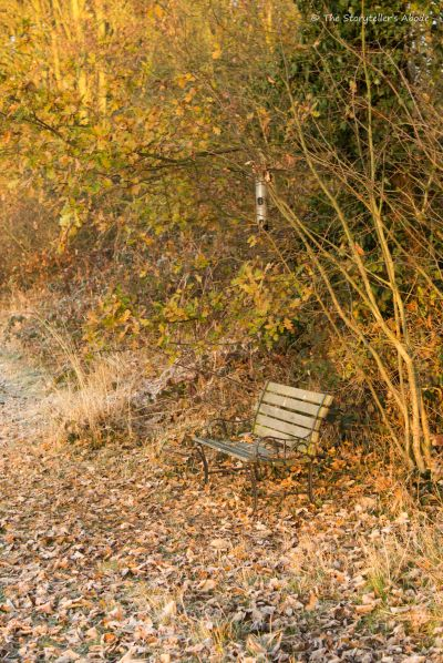 bench-at-frosty-dawn