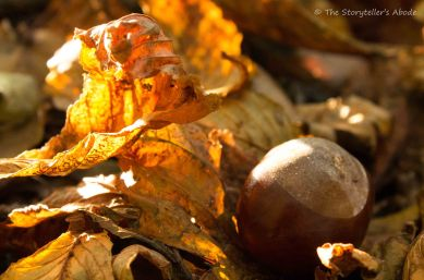 conker-and-leaf