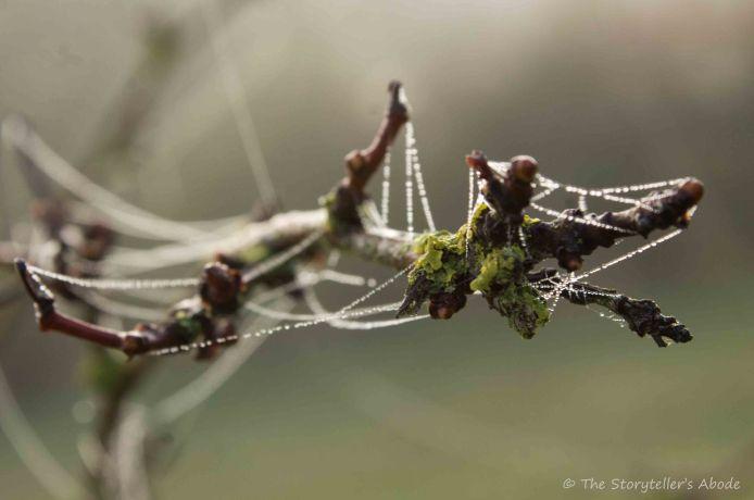 dew-drop-webs