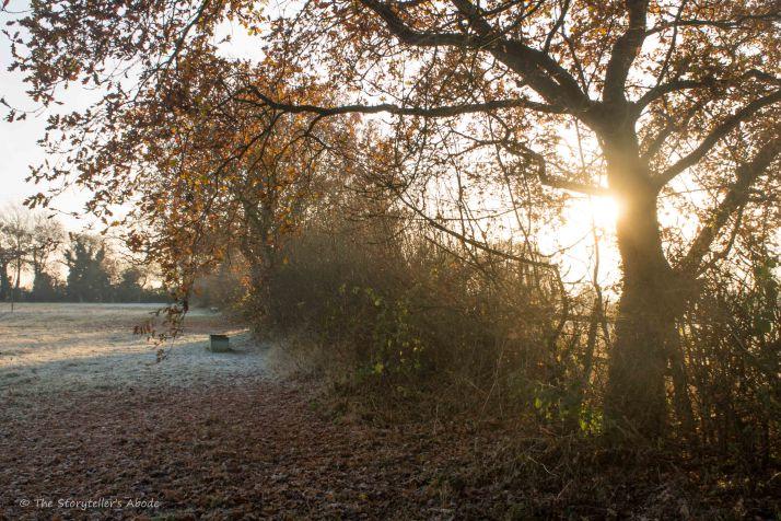early-morning-light