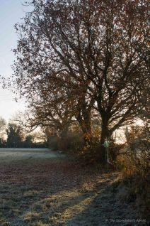 early-morning-sun-onto-meadow
