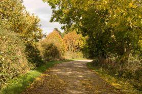 early-november-lane