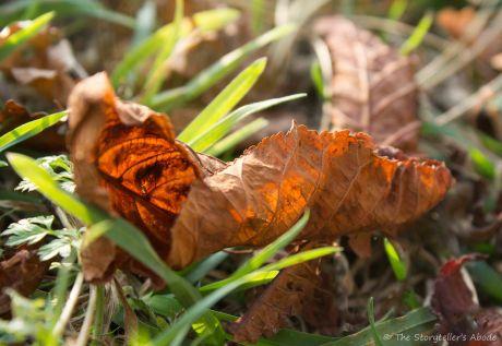fallen-leaf