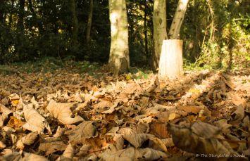 fallen-leaves