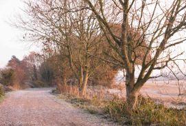 frosty-lane-in-late-november-2
