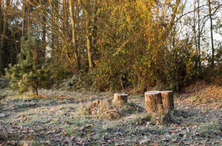 frosty-treestumps